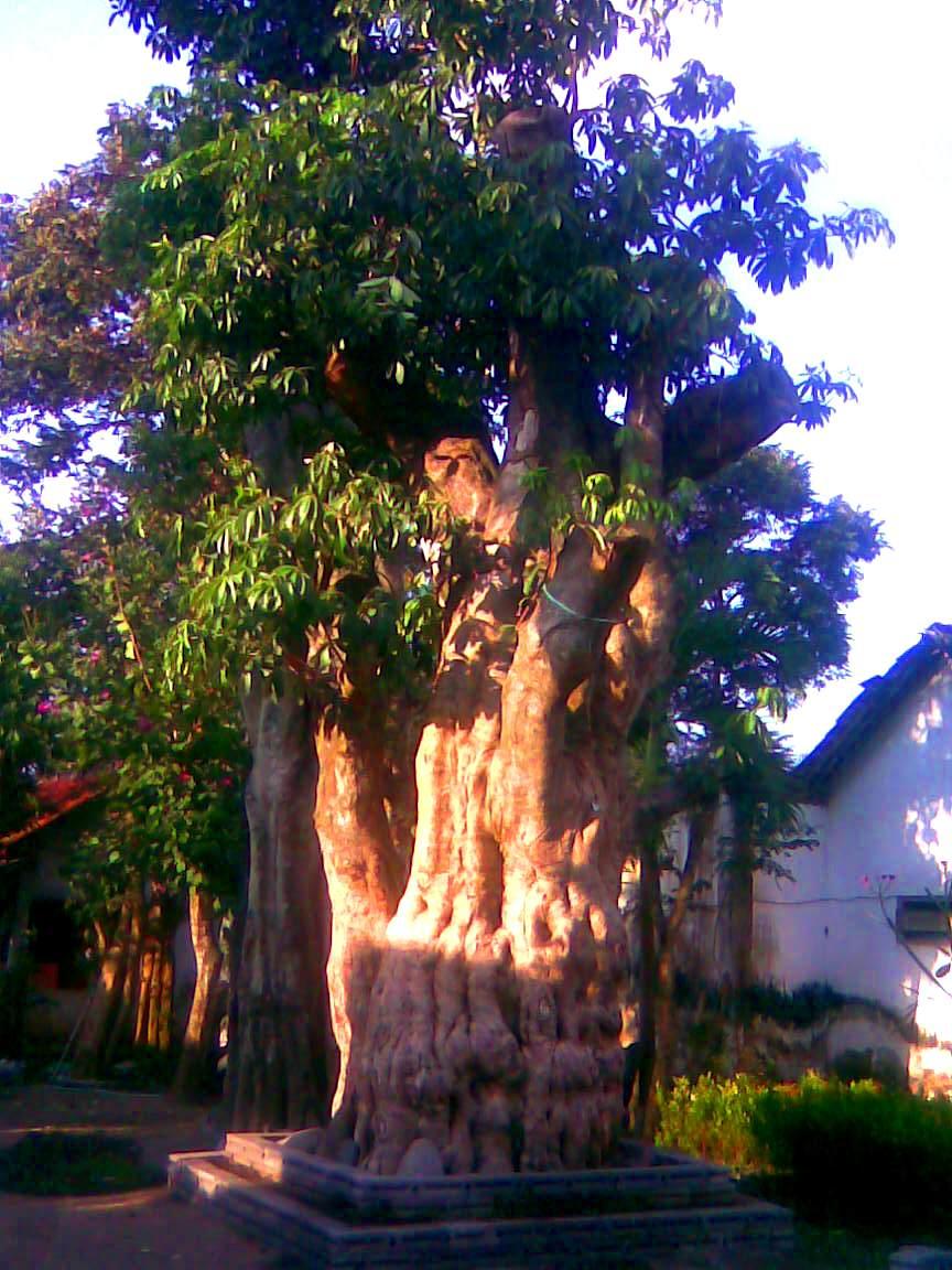 Jual Tanaman Hias Di Jawa Barat Aneka Bibit Pohon Dan Biji Rumput Cimahi