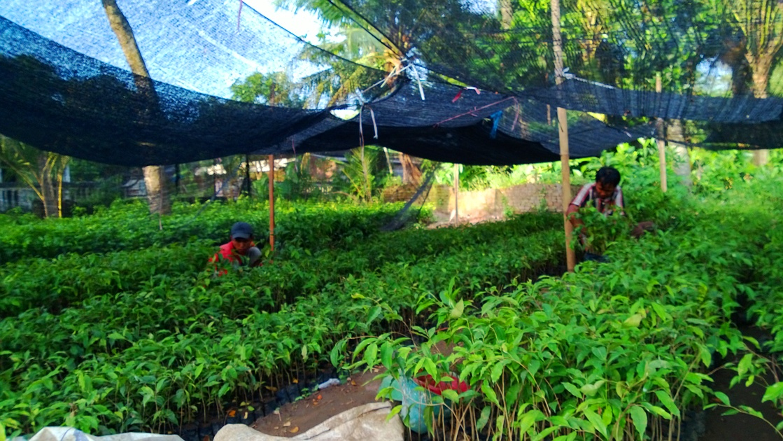 Penjualan dan jasa penanaman aneka bibit tanaman seperti jati, sengon